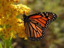 Lepidópteros, un aporte al paisaje